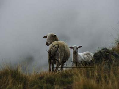Tras los ojos del pastor, Llanos del Hospital