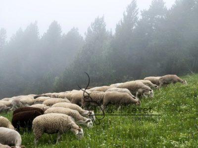 Tras los ojos del pastor, Zacarias
