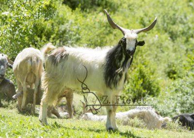 exposicion tras los ojos del pastor