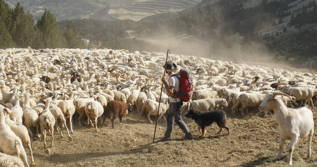 contacto tras los ojos del pastor