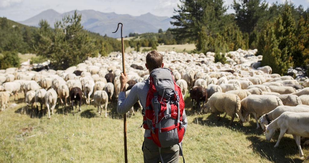 entre ovejas, tras los ojos del pastor