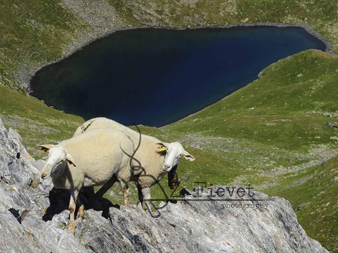 Tras los ojos del pastor