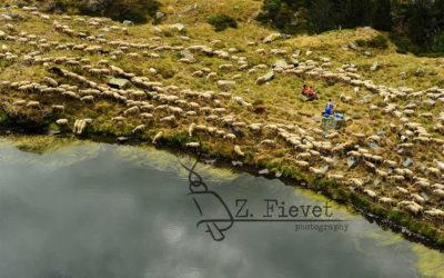 El pastoreo y el turismo