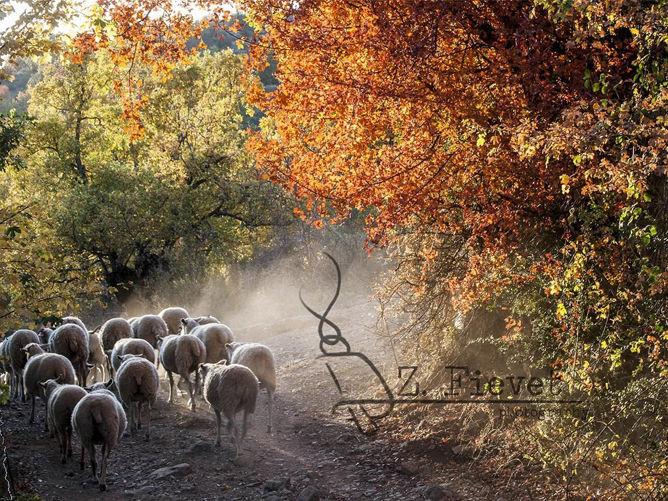 Tras los ojos del pastor, Zacarias Fievet